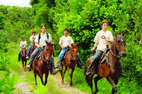 panaca-caballos