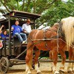 panaca-carros-caballos