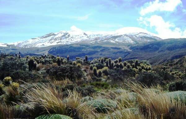 Parque Nacional Natural Los Nevados, Colombia; Fotografía tomada de internet.