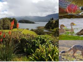 Laguna de la Cocha Nariño, Colombia, flora y fauna; Fotos tomadas de internet.