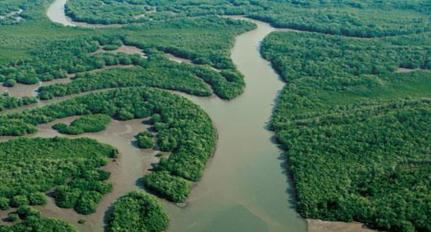 Delta del Rio Baudó, Choco; Fotografía tomada de internet.