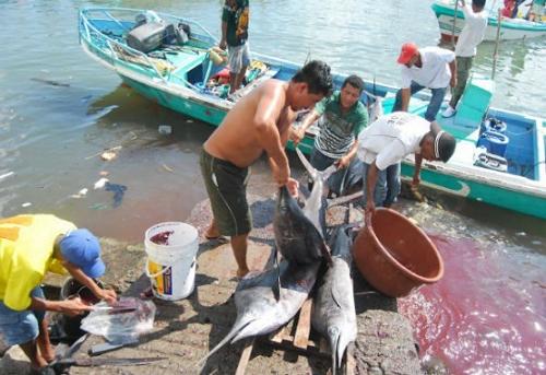 PEsca en la region pacifica