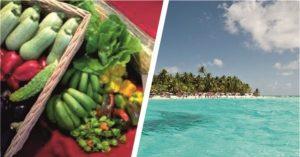 SEctor agrícola de la región insular