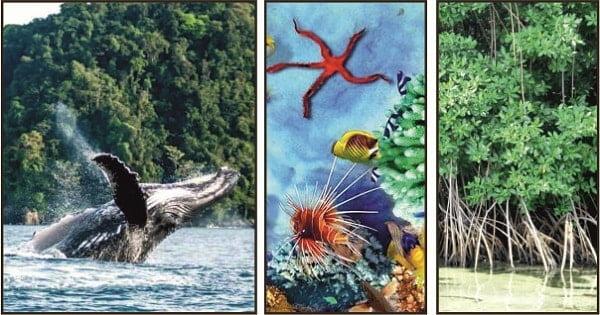 Biodiversidad en las islas