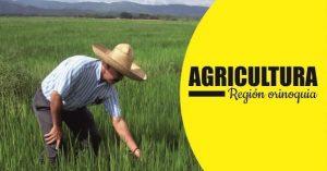 Agricultura region orinoquia