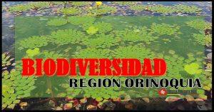 diversidad de fauna y flora region orinoquia
