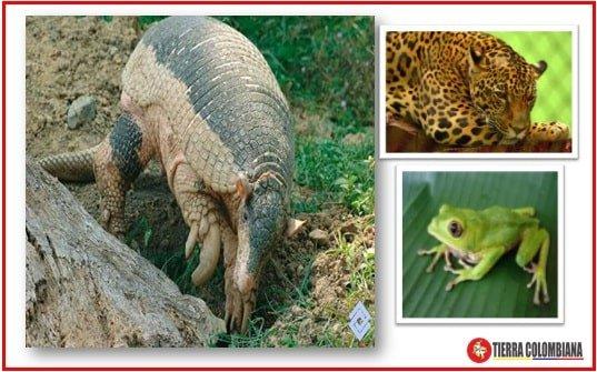 fauna region orinoquia