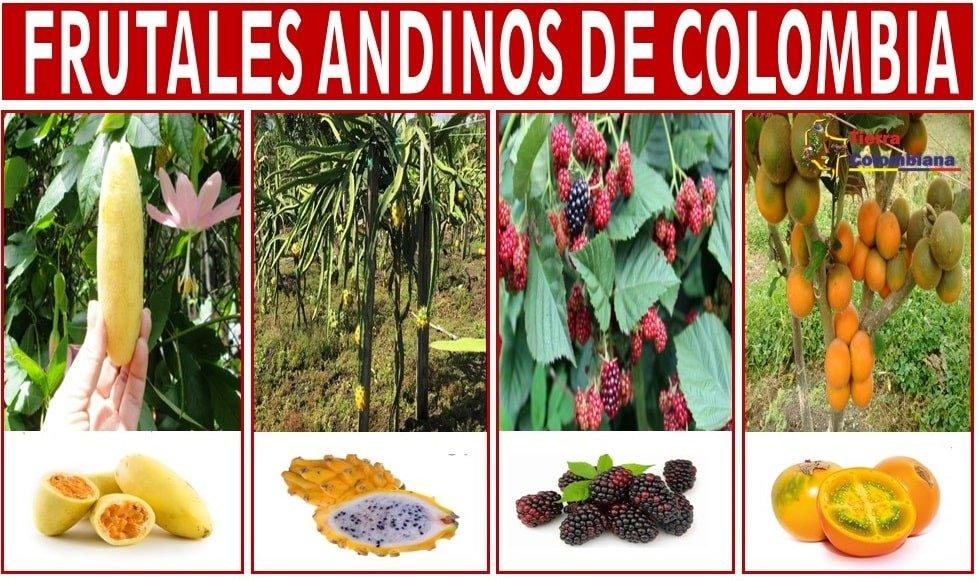 frutales andinos