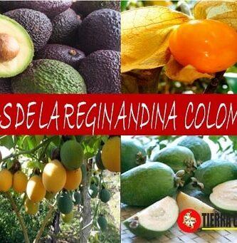 frutas de la region andina
