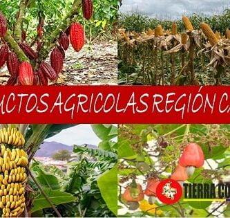 agricultura de la region caribe